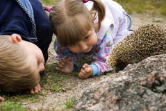Children and hedgehog Royalty Free Stock Image