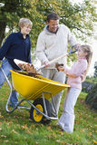 Children helping father to collect autumn leaves. In wheelbarrow Royalty Free Stock Photo