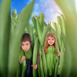 Children Hiding in Healthy Green Bean Grass. Two children are hiding in a vegetable scene of organic green beans for a health or nutrition concept. The girl and Stock Photo