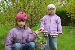 Children hold in hand a basket with daisy seedling Stock Images