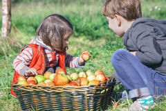 Children holding organic apple from basket with Royalty Free Stock Photography