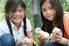 Children holding pet chicks Royalty Free Stock Image
