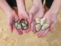 Children holding Pippies that they have collected at the beach i Royalty Free Stock Photography