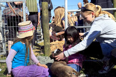 Children holding and stroking a new born lamb Stock Photo