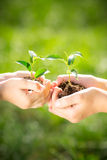 Children holding young plant in hands Royalty Free Stock Image