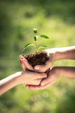 Children holding young plant in hands Stock Photography