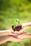 Children holding young plant in hands Royalty Free Stock Photo