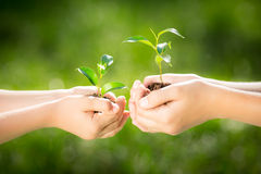 Children holding young plant in hands Royalty Free Stock Images