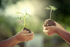 Children holding young plant in hands Stock Image