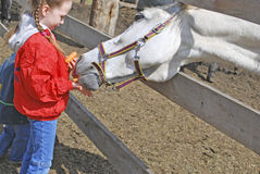 Children and horse. The children are feed the white horse Royalty Free Stock Photo