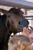 Children and horse. Children caress a horse, stretch to it hands Stock Photos