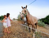 Children and horses. Two small children watching horses on a hillside field stock photos