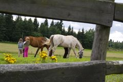 Children and horses. Two child and two horse Royalty Free Stock Photography