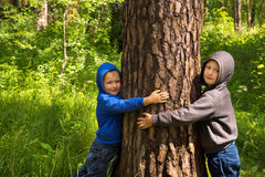 Children hugging pine (tree) Royalty Free Stock Photo