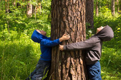 Children hugging pine (tree). Children (boys, hands) hugging pine, playing and having fun outdoor in summer forest (park). Environmental protection concept Stock Photography