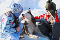 Children and husky dog Royalty Free Stock Images