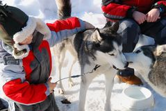 Children with husky dogs Royalty Free Stock Images