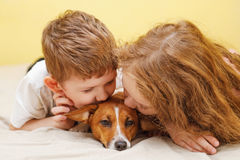 Children kissing a puppy jack russell dog. Royalty Free Stock Photo