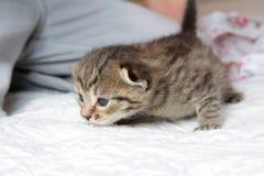Children with kitten Stock Photo