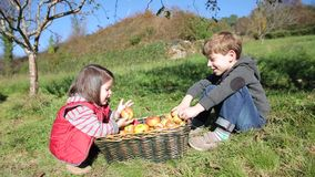 Children laughing and putting apples inside of stock video footage