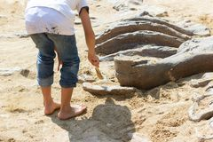 Children learning about, Excavating dinosaur fossils simulation stock photo