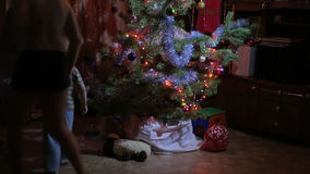 Children looking for gifts under the Christmas tree stock video