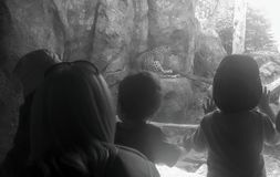 Children looking at leopard in zoo Stock Photography