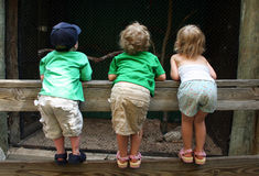 Children Looking over a Fence. Three little kids look over a fence into a cage at the zoo Stock Photos