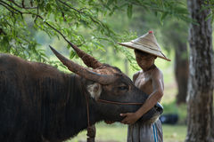 Children love to Buffalo under Trees Stock Photography