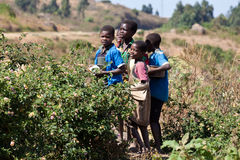 Children in Malawi Royalty Free Stock Image