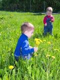 Children on meadow dandelion . Royalty Free Stock Photo