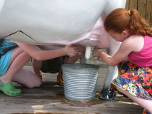 Children milking a fake cow. Three children milking a fake white cow into a metal bucket Royalty Free Stock Photography