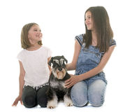 Children and miniature schnauzer. In studio stock image