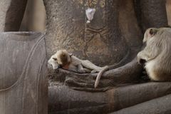 Children Monkey sitting sleeping on ancient Buddha hand statue, Candid animal wildlife picture waiting for food. Group of mammal on historical travel Royalty Free Stock Photography
