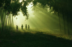 Children In The Morning. The children walking and playing in bright morning Stock Photography