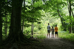 Children on Nature Hike. Medium view of children holding hands while on a nature hike, framed by trees. Vertical format Royalty Free Stock Photos