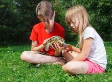 Children observing turtle outdoor Stock Image
