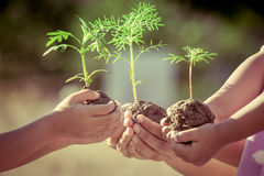 Children and parent holding young plant in hands Stock Photos