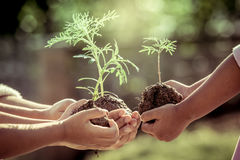 Children and parent holding young plant in hands Royalty Free Stock Photo