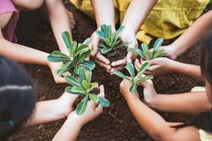 Children and parent holding young tree in hands for planting Stock Photo