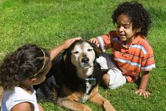 Children and pets. Family dog patiently accepts loving attention from young children Stock Photography