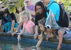 Children petting fish in aquarium Royalty Free Stock Image