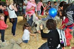 Children Petting Lambs - 2012 Canterbury A&P Show. Christchurch, New Zealand - November 16, 2012: Children and parents pet lambs and sheep at the 2012 Stock Photos