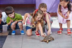 Children petting turtle. Many happy children petting a turtle in a kindergarten playground Stock Photos