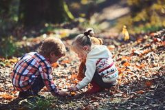 Children pick acorns from oak trees. Brother and sister camping in autumn forest. Little boy and girl friends have fun. On fresh air. Childhood and child royalty free stock photography