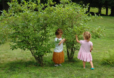 Children Picking Berries Royalty Free Stock Image