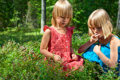 Children picking berries in a summer forest. Two little girls wearing blue and red summer dress picking and eating whortleberries in a forest Royalty Free Stock Image