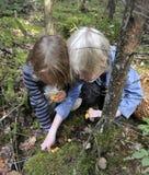 Children picking chanterelles Royalty Free Stock Images