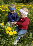 Children picking dandelions. Friends dressed in red and blue sitting in a meadow picking dandelions Royalty Free Stock Photography
