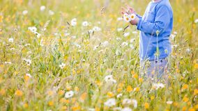 Children picking flowers on a meadow stock images